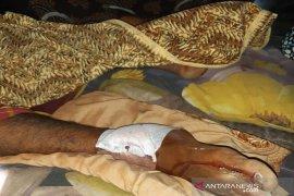 Seorang petani nyaris tewas saat diterkam buaya di Aceh Timur