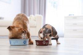 Kasus pertama, seekor anjing dan tiga kucing tertular virus corona