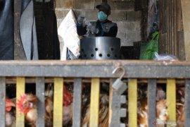 Antisipasi penyebaran virus flu burung