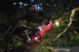 Seorang pengendara tewas ditempat usai tabrak pohon tumbang