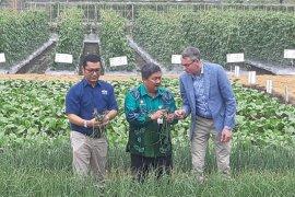 Wamen Pertanian Belanda nilai produksi benih Ewindo berkualitas
