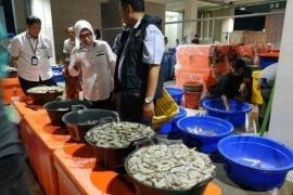 Perum Perindo: Perdagangan ikan tidak terganggu wabah corona
