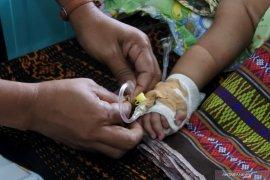 1.313 orang penderita DBD di Sikka sudah sembuh