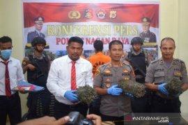 Jual ganja ke warga di desa, warga Nagan Raya ditangkap polisi