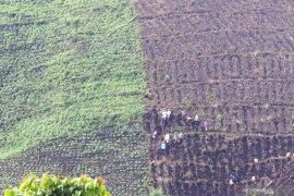 Alih fungsi hutan untuk lahan pertanian