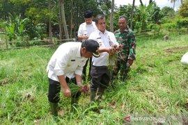 Bawang Merah Bima Brebes prioritas di Padangsidimpuan
