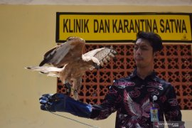 Karantina elang Jawa