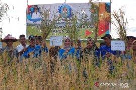 Bupati ajak petani Punggur Besar tanam padi dua kali setahun