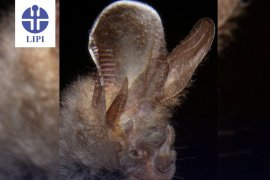 Virolog China  klaim  kelelawar tapal kuda sebagai inang COVID-19