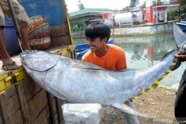 Fisheries exports up amid COVID-19 pandemic: ministry