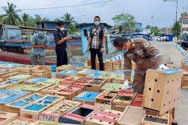 Bea cukai gagalkan penyelundupan unggas Rp8 miliar di Aceh Tamiang
