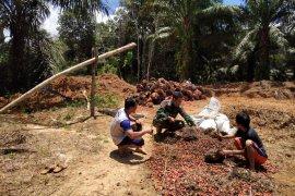 Praka Rahmad bantu warga kumpulkan brondol sawit