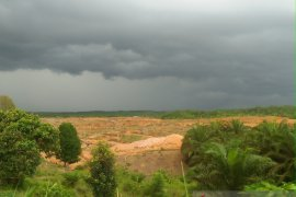 Harga sawit di Mukomuko bertahan rendah