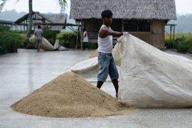 Petani Lebak Januari-Februari panen padi seluas 9.480 hektare