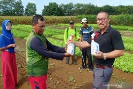 Balittra bagikan 500 botol cairan disinfektan ke para petani