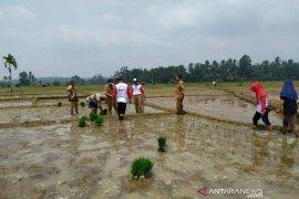 Petani Mukomuko dapat bantuan pengolahan pupuk organik