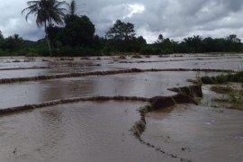 Ratusan hektare sawah di Mukomuko terendam banjir