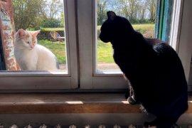 Seekor kucing di Hong Kong positif virus corona diduga tertular pemilik