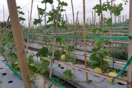 Petani tetap dapatkan benih berkualitas ditengah pandemi