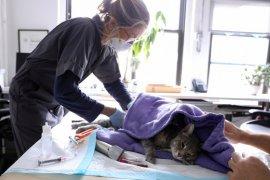 Kucing peliharaan di Inggris jadi  hewan pertama yang positif corona