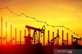 Harga minyak jatuh karena stok AS secara mengejutkan meningkat
