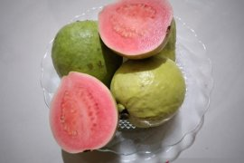 Jambu biji, kulit jeruk dan daun kelor diduga kuat mampu atasi  COVID-19