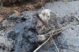 Seekor gajah betina mati di Aceh Timur