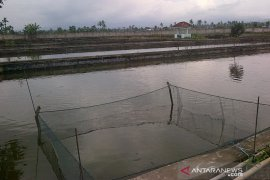 Proyek rehabilitasi balai benih ikan di Rejang Lebong dibatalkan