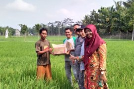 Distan Mukomuko bantu petani kendalikan penyakit padi