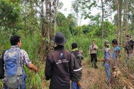 Pemasangan kamera trap di lokasi korban dimangsa harimau di Besitang Langkat