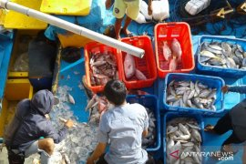 Pemkab Kayong Utara tampung ikan nelayan Pulau Karimata