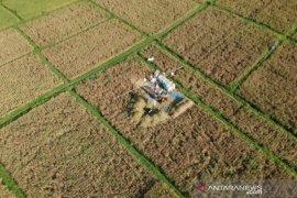 Pemkab Badung minta petani hidupkan 'Sekaa Manyi' untuk panen padi