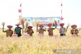 Lapsus- Tanbu genjot ekonomi dari sektor pertanian