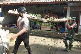 Polri dan TNI singkirkan pohon tumbang menimpa pura