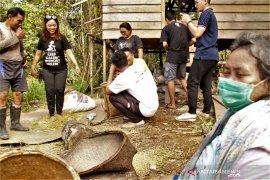 Panen padi orang Mapnan di Long Duhung Kabupaten Berau
