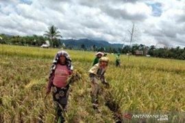 Dukung Kostra Tani, Polbangtan Medan kawal panen padi petani Tapteng