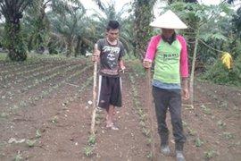 Petani jagung Muarojambi jaga semangat di tengah COVID-19 dengan lakukan pemupukan pertama