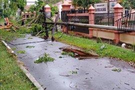 Hujan disertai angin kencang, pohon dan tiang listrik di Langkat tumbang