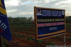 Nasdem Bangka Barat kembangkan kebun percontohan hortikultura
