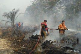Tiga hektare lahan gambut ditanami sawit terbakar di Langsa