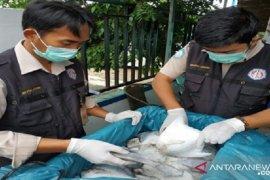 Pengiriman ikan melalui BKIPM Jambi  meningkat di tengah pandemi COVID-19
