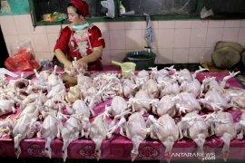 Harga ayam potong turun di Makassar Page 2 Small