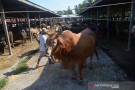 """Pasar hewan jelang tradisi """"Meugang"""""""