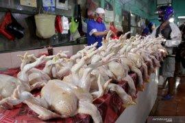Jelang Ramadhan, harga ayam potong anjlok capai Rp17.000 per kg