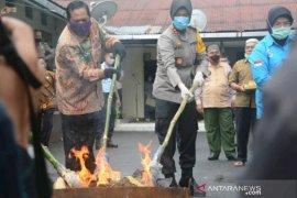 Polres Padangsidimpuan musnahkan ratusan kg ganja kering