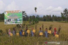 Dinas Pertanian Madina panen raya di Desa Pidoli Lombang