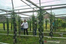 Ketersediaan komoditas hortikultura jelang Ramadhan aman