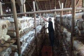 Permintaan jamur tiram di Kabupaten  Lebak meningkat saat COVID-19