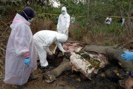 BKSDA nyatakan gajah mati di Aceh Timur diduga akibat racun