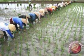 Buktikan pertanian tidak berhenti, Kementan kawal petani tanam padi di Sumut